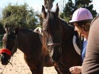 Entre caballos