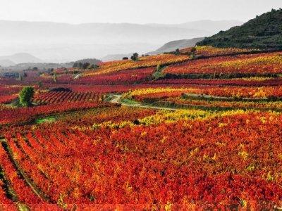 Apit La Rioja