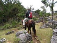 在山上与马