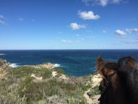 Horse watching the sea