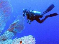 珊瑚间游泳