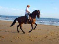 Tramonto sulla spiaggia con il cavallo