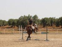 Salto profesional a caballo