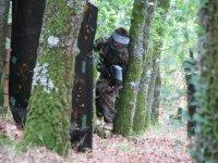 Escenario en el bosque