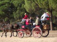 Coche de caballos en el Rocio