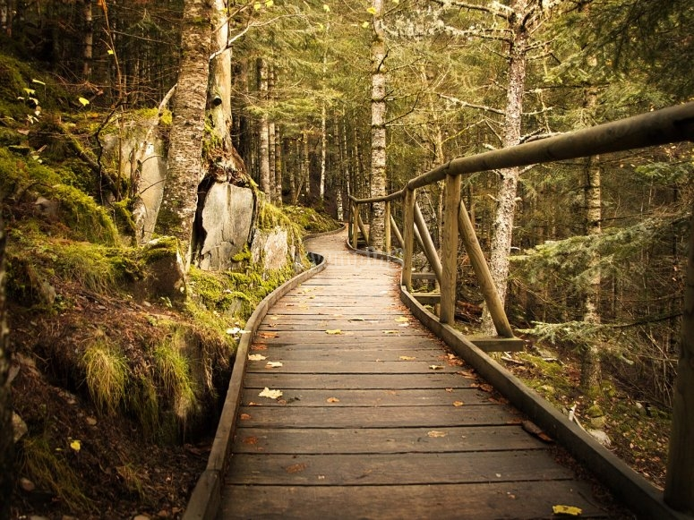 camino de madera
