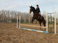 la escuela de equitación