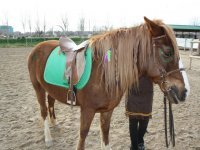 caballos para los mayores y ponis para los pequeños