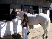Preparando al caballo en Deva