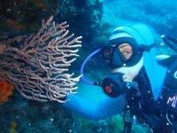 Buceando entre corales en el fondo del mar