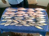 un dia de pesca de fondo