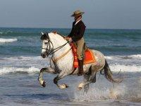 奔马疏导对马