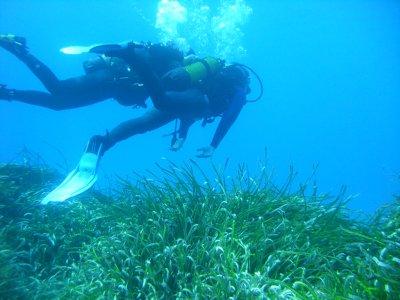 Ocean Sub Estartit