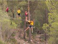 Circuito aéreo entre árboles