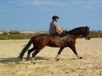 用马匹学习