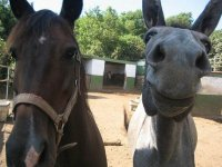 Our horses from La Estrella