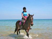 骑马在海滩上的马在黄花