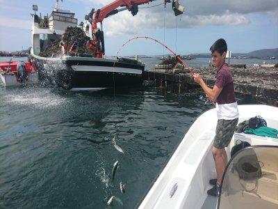 Amare Pesca