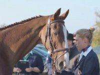 girl stroking a horse