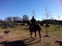 walking on horseback with two dogs