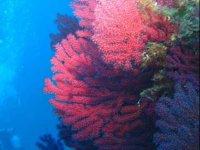 Los corales te esperan