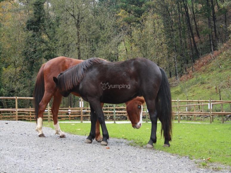 I nostri cavalli a riposo