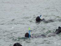 阿罗萨岛上的浮潜
