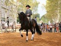 fiestas del caballo