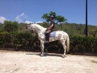 Subido en caballo con pintas marrones