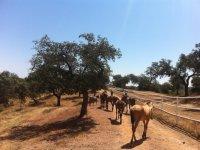 Caballos paseando al lado de la valla