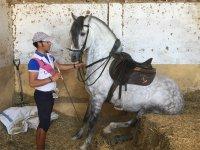 Doma clásica en escuela de equitación de Madrid