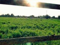 Idyllic rural setting