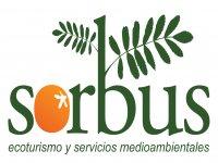 Sorbus