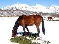 el caballo en invierno