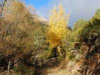 ruta en otoño