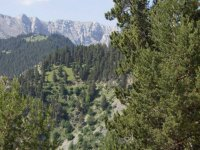 view of a natural landscape with pine trees