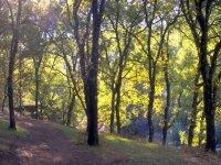Forêts de Cuacos de Yuste