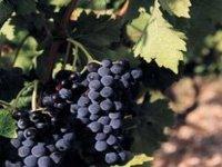 葡萄酒与原产地名称