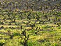 Tarragona内部的葡萄酒旅游日