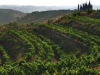 Priorat地区的葡萄酒厂