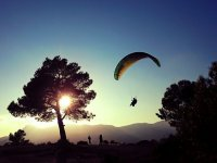 Paraglider between the treas at sunset