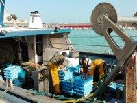 Pescadores en el puerto de Castellon