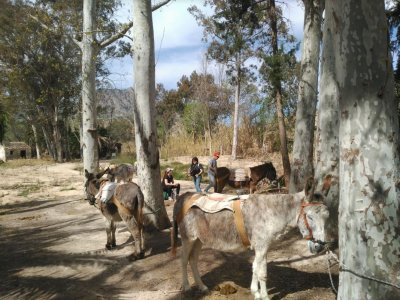 Proyecto Burruticas