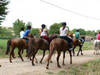 与马游泳从农场散步马离开河边