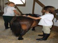 Cepillando al poni