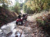 Quad in bicicletta attraverso la foresta