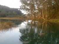 Ribera del bosque