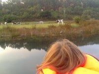 Vacas desde el barco