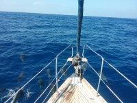 Velero para excursiones por calas y avistamiento de cetáceos