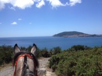 Watching the sea from the horse